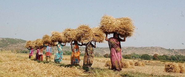 WOMEN CARRY BUNDLES OF WHEAT