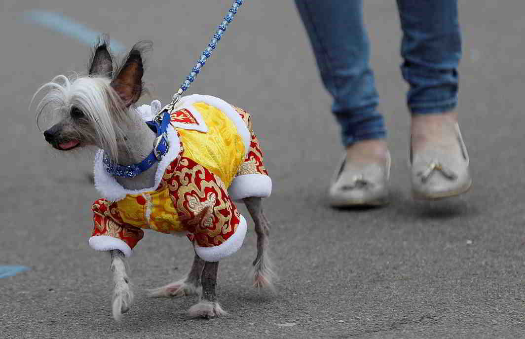 UGLY OR BEAUTIFUL? A dog arrives for the second day of the Crufts Dog Show in Birmingham, Reuters/UNI