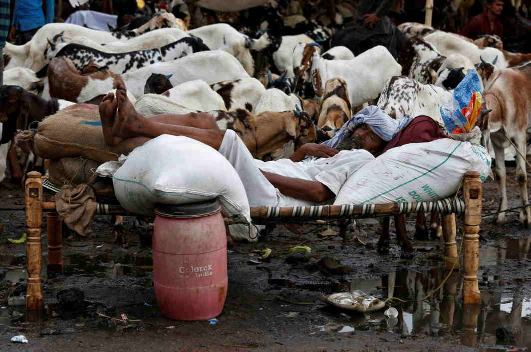 HERE AND NOW: A trader sleeps amidst his goats at a livestock market ahead of the Eid al-Adha festival in Kolkata, Reuters/UNI