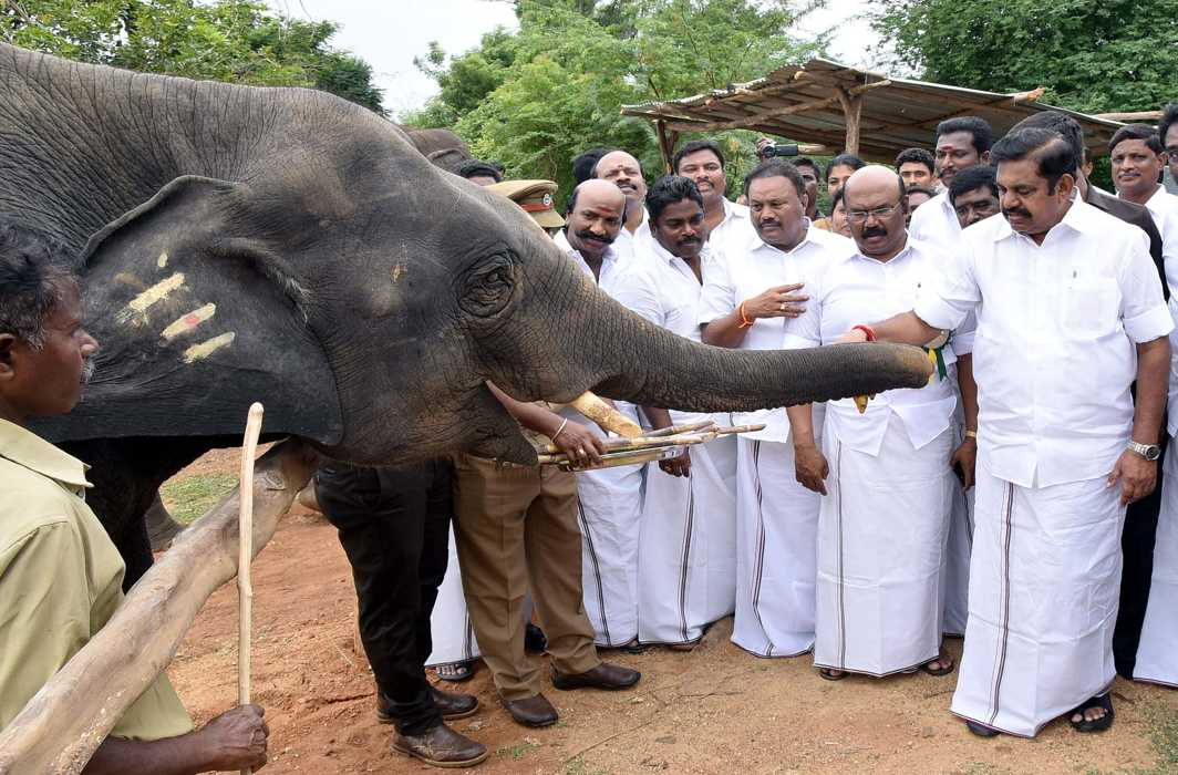 ANIMAL INSTINCT: Tamil Nadu Chief Minister K Palaniswami offers banana and sugarcane to an elephant during his visit to Arignar Anna Zoological Park, in Chennai, UNI
