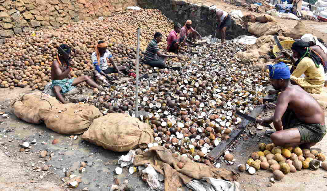 FOR THE GODS: Workers process coconuts received as offering, at the hill shrine of Sabarimala, UNI