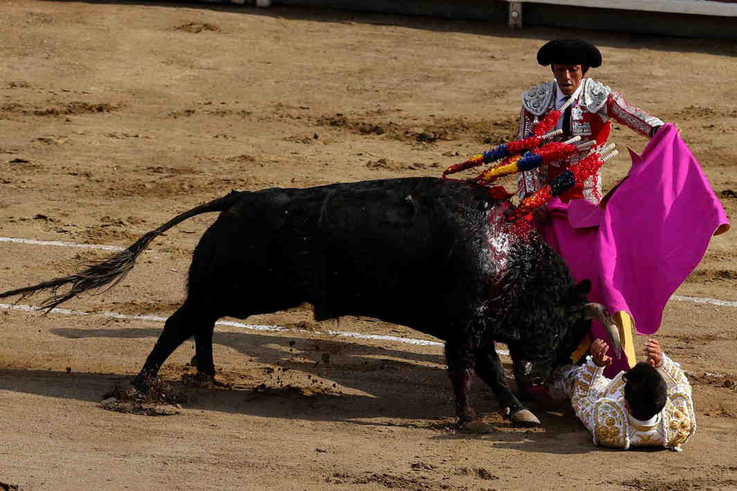 NOT SO EASY: Venezuelan bullfighter Jose Enrique Colombo is tackled by a bull during a bullfight at Peru's historic Plaza de Acho bullring in Lima, Peru, Reuters/UNI
