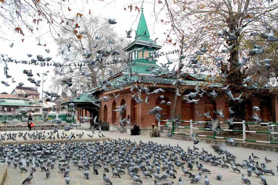 PET FEATHERS: A flock of pigeons eat grains next to the shrine of Khwaja Naqshband Sahib in Srinagar, UNI