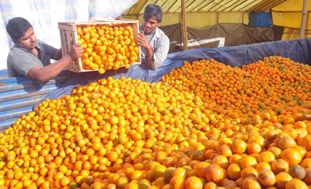 SEA OF ORANGES: Labourers loading orange on a truck at the Samdrup Jongkhar Thromde market at the India-Bhutan International gate, UNI