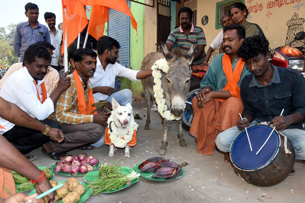 SENSE OF HUMOUR: Activists of Bharat Hindu Munnani perform the 'marriage' of a dog and a donkey to protest celebration of Valentine's Day, in Chennai, UNI