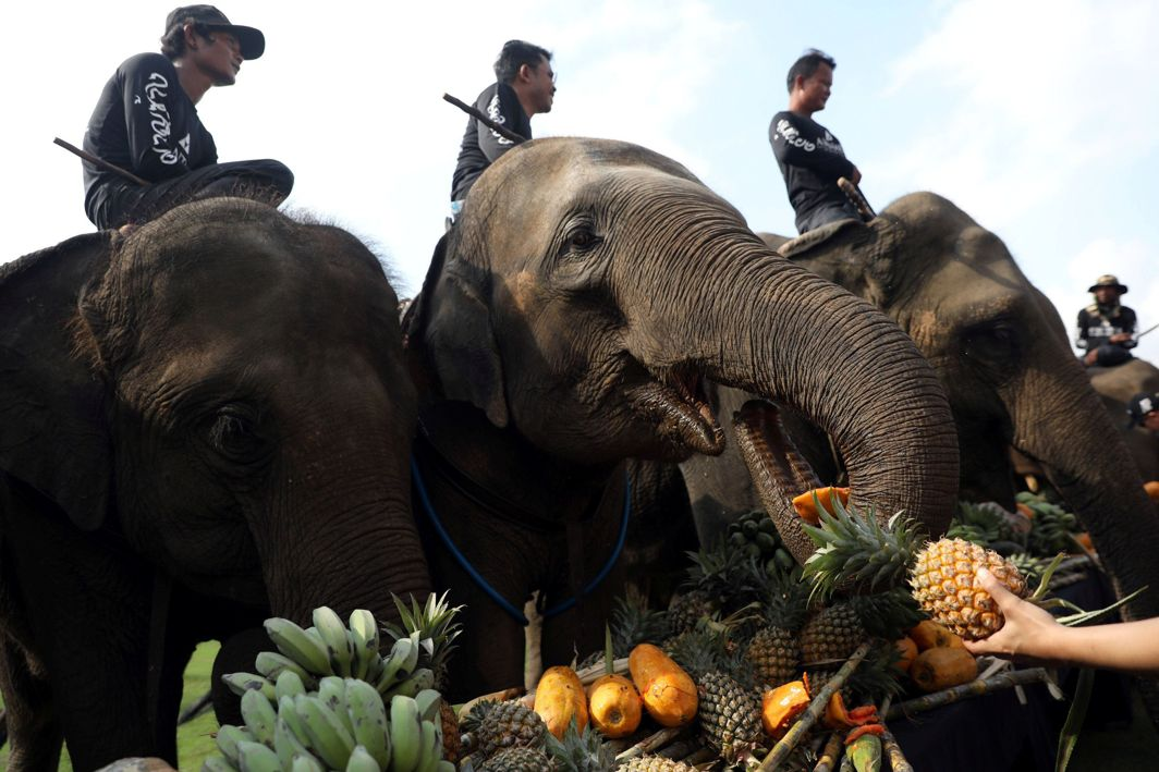 TREAT THE JUMBOS: People feed elephants before a match at the annual King's Cup Elephant Polo Tournament at a riverside resort in Bangkok, Thailand, Reuters/UNI