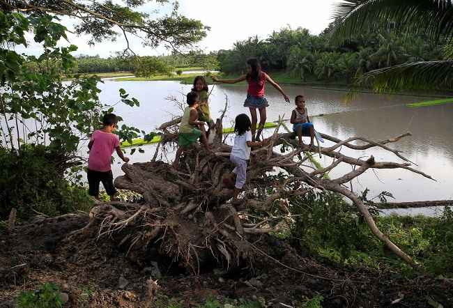 CAMARINES SUR, DEC 26 ;- Childrens play at a tree uprooted by strong winds brought by Typhoon Nock-ten which cut through Camarines Sur, Bicol region, central Philippines December 26, 2016. REUTERS-17R